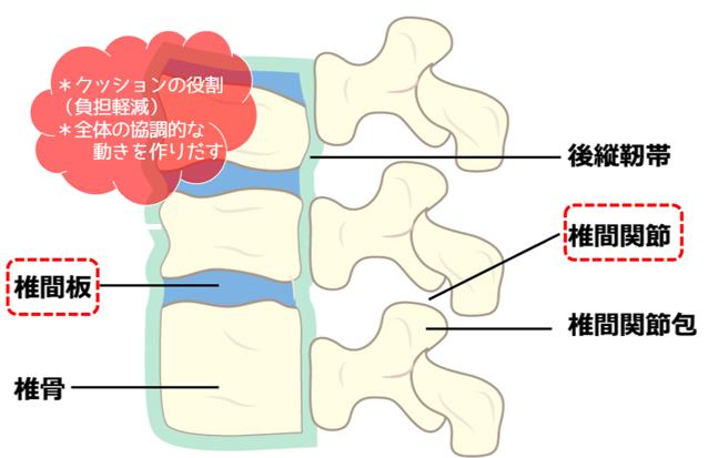 椎間関節と椎間板